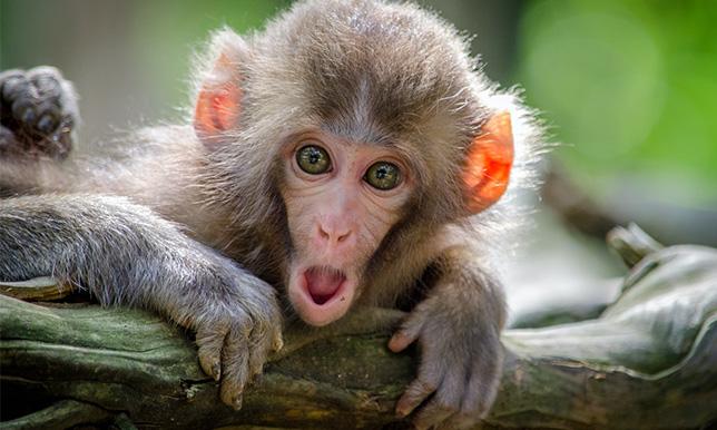 驚いている猿の画像